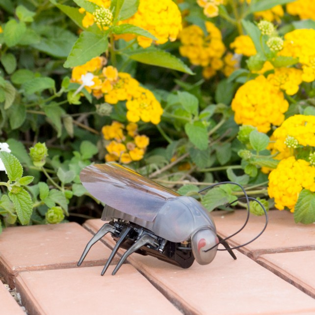 Halloween Fun Comes Early As iHelicopters.net Releases iPhone-Controlled Insects